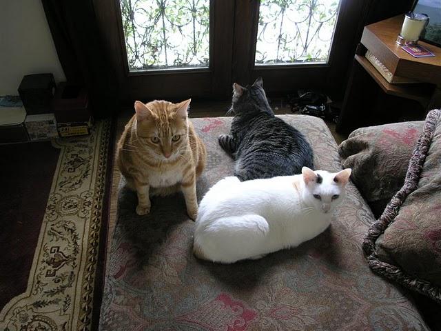 Кампания басиста Black Sabbath против удаления когтей у кошек